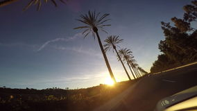 Driving by Palm Trees at Sunset stock video footage