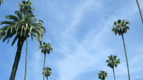 Driving past rows of palm trees stock footage