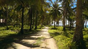 Driving on pathway between palm trees close to beach, Philippines. Camera moving smoothly stock video