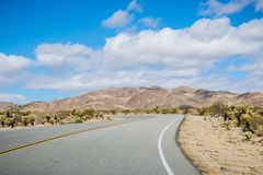 Driving on a paved road in Joshua Tree National Park; cholla cacti on the side of the road, south California stock photography