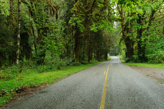 Driving in rain forest. Driving in hoh rain forest in olympic national park, washington, usa Royalty Free Stock Photos