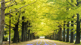 Driving on an road towards to upcoming 2016  Royalty Free Stock Photos