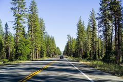 Driving through Shasta National Forest in Northern California; evergreen trees line up the highway and cast long afternoon shadows. On the road stock image