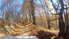 Driving slowly a Car on a forest POV. Driving slowly a Car on a forest internal dirt Road - POV - Point of view front - windshield. Day stock video footage