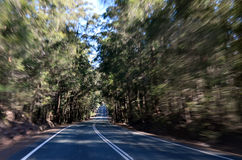 Driving through Springbrook National Queensland Australia royalty free stock images