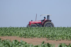 Driving a tractor on corn field Royalty Free Stock Image