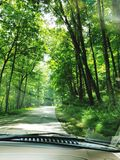 Driving on tree lined road royalty free stock photos