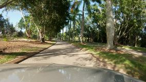 Driving through a tropical Palm Tree lined road dividing a golf course stock footage