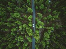 Driving up the mountains surrounded by evergreens royalty free stock images