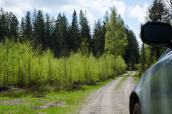 Driving in the woods at spring Royalty Free Stock Photo