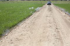 Driving between young rice paddy fields Stock Image