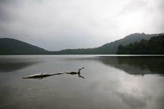 Drivved i en lugn sjö, på en mulen dag Arkivbild