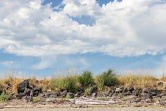 Drivved och havsgräs med moln Arkivfoto