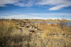 Drivved och lövverk längs Lakeshore arkivbild