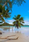 Drivved och palmträd på en tropisk strand Royaltyfri Bild