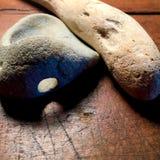 Drivved och sten med det naturliga hålet Arkivbild