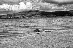 Drivved på den Ballycastle stranden, Co Antrim Irland royaltyfri foto