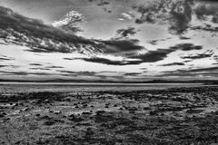 Drivved på den Ballycastle stranden, Co Antrim Irland royaltyfria bilder
