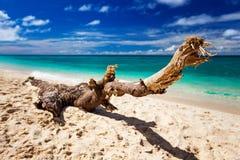 Drivved på en härlig strand Fotografering för Bildbyråer