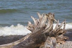 Drivved på en Lake Huron strand Arkivfoton