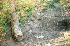 Drivved på golvet med jordbakgrund Royaltyfri Bild