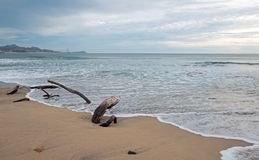 Drivved på stranden i San Jose Del Cabo nära Cabo San Lucas i Baja California Mexico arkivfoton
