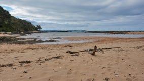 Drivved på stranden på kabelfjärden, mangonui Nya Zeeland royaltyfri bild