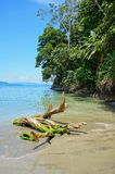 Drivved på stranden med tropisk vegetation Arkivbild