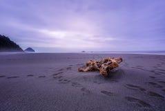Drivved som tvättas upp längs den steniga kustlinjen i Oregon arkivbild