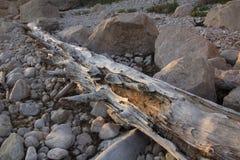 Drivvedjournal och stenblock på solnedgången på stranden i Connecticut Arkivbilder
