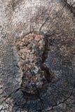 Drivvedkonst på naturer Arkivfoto
