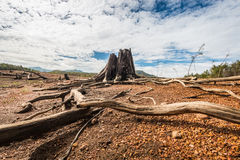Drivvedkonst på naturer Fotografering för Bildbyråer