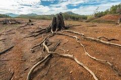 Drivvedkonst på naturer Royaltyfri Fotografi