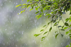 Drizzle rainforest. Drizzling in the tropical rainforest gives a cold and refresh emotion Royalty Free Stock Photography