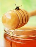 Drizzler de la miel con la abeja Imágenes de archivo libres de regalías
