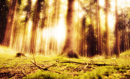 dröm- skog Royaltyfria Bilder