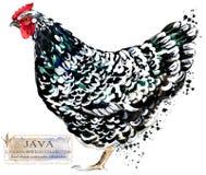 Drobiowy uprawiać ziemię Kurczak hoduje serie domowa rolna ptasia ilustracja ilustracji