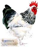 Drobiowy uprawiać ziemię Kurczak hoduje serie domowy rolny ptak Obraz Stock