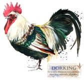 Drobiowy uprawiać ziemię Kurczak hoduje serie domowy rolny ptak Obrazy Stock