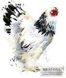 Drobiowy uprawiać ziemię Kurczak hoduje serie domowy rolny ptak ilustracji