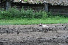 Droevig eenzaam katje stock afbeelding