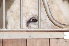 Droevig gezicht van een ezel die van achter de omheining gluren royalty-vrije stock foto's