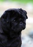 Droevig hondprofiel Royalty-vrije Stock Foto