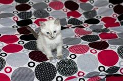 Droevig katje met blauwe ogen op een bed Stock Foto