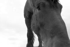 Droevig paardportret stock fotografie