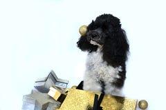 Droevig probeerde ik te helpen Royalty-vrije Stock Fotografie