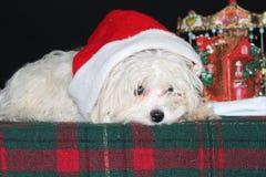 Droevig Puppy Royalty-vrije Stock Foto's