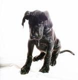 Droevig puppy Royalty-vrije Stock Afbeelding