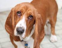 Droevig Puppy Royalty-vrije Stock Foto
