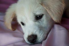 Droevig puppy op deken royalty-vrije stock foto